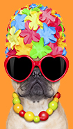 Dog wearing flower swim cap and sunglasses.